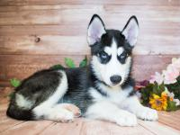 Puppies For Sale | Kittens For Sale | Colorado Springs, CO