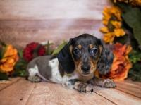 Puppies For Sale   Kittens For Sale   Colorado Springs, CO
